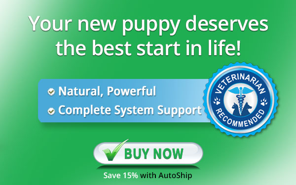 nuvet labs dogs  vitamins supplements veterinarian recommended